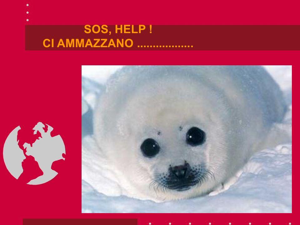 SOS, HELP ! CI AMMAZZANO..................
