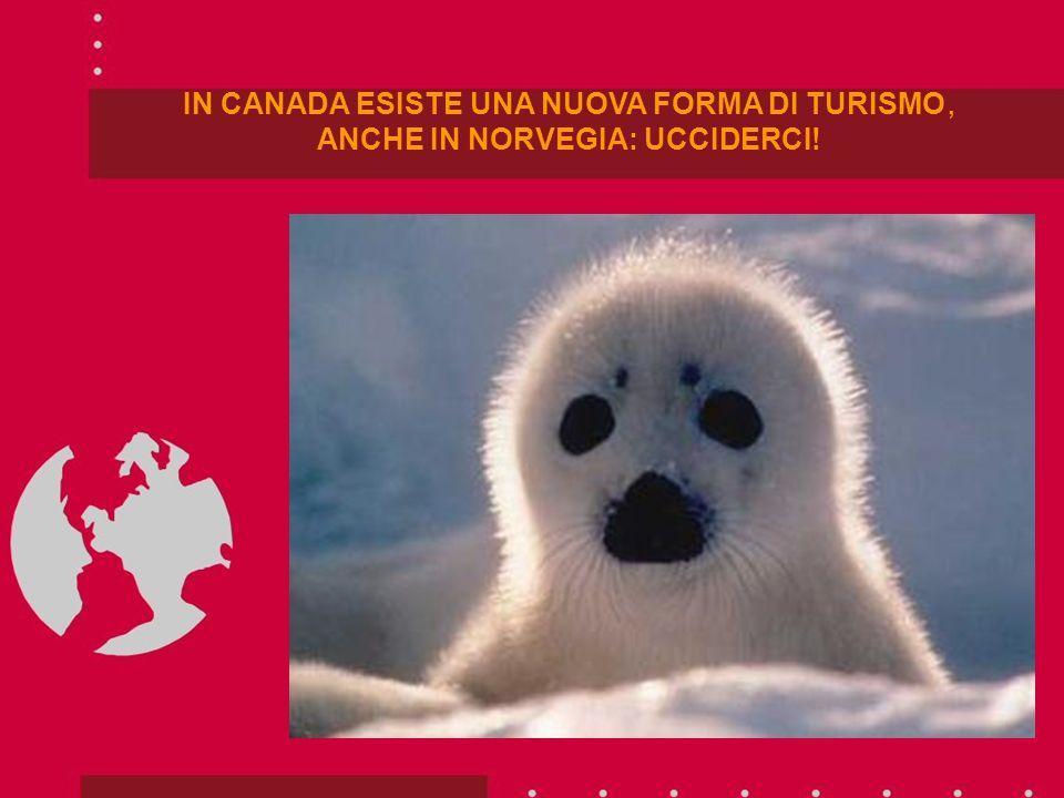 IN CANADA ESISTE UNA NUOVA FORMA DI TURISMO, ANCHE IN NORVEGIA: UCCIDERCI!