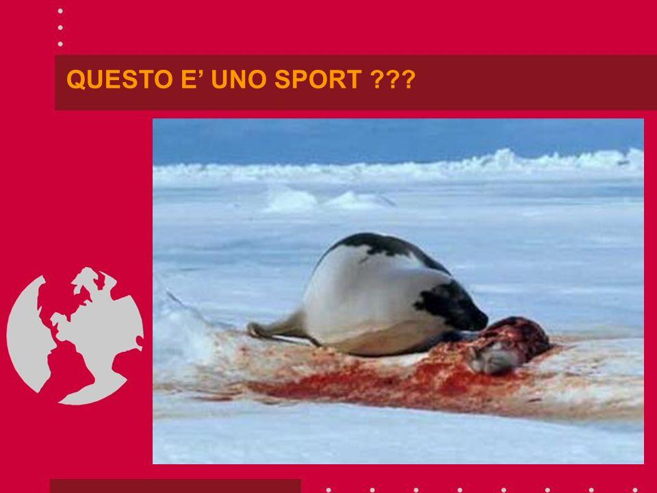 TI PREGO DI PARTECIPARE AFFINCHE NON ACCADA PIU!!!