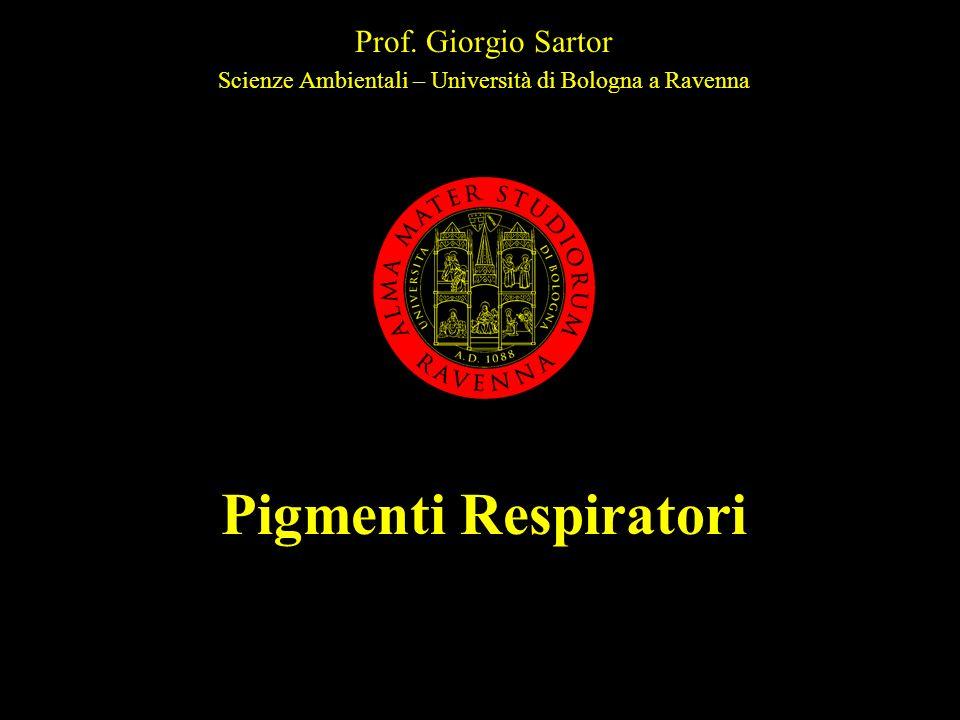 gs 2004Pigmenti respiratori42 Nei polmoni o nelle branchie Alta pO 2 Il legame di O 2 forma H + che favorisce la decomposizione di HCO 3 - e il rilascio di CO 2