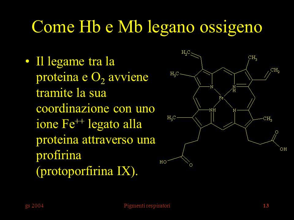 gs 2004Pigmenti respiratori13 Come Hb e Mb legano ossigeno Il legame tra la proteina e O 2 avviene tramite la sua coordinazione con uno ione Fe ++ legato alla proteina attraverso una profirina (protoporfirina IX).