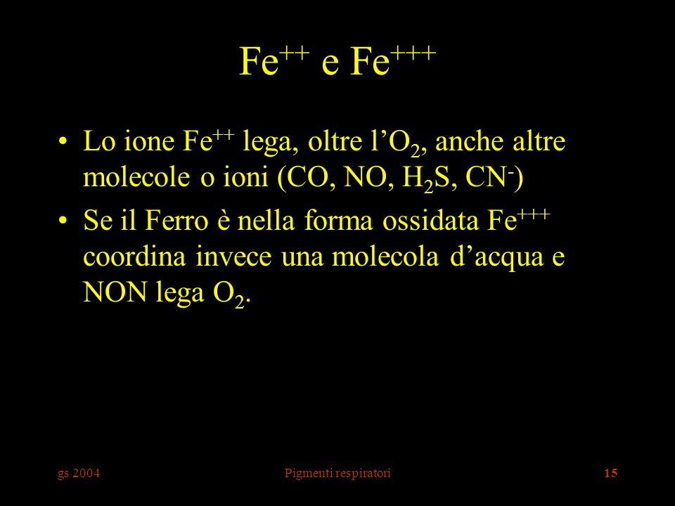 gs 2004Pigmenti respiratori15 Fe ++ e Fe +++ Lo ione Fe ++ lega, oltre lO 2, anche altre molecole o ioni (CO, NO, H 2 S, CN - ) Se il Ferro è nella forma ossidata Fe +++ coordina invece una molecola dacqua e NON lega O 2.