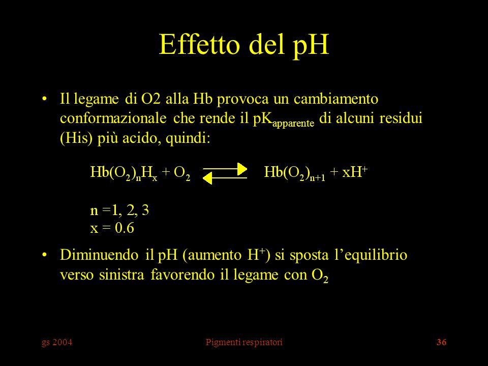 gs 2004Pigmenti respiratori36 Effetto del pH Il legame di O2 alla Hb provoca un cambiamento conformazionale che rende il pK apparente di alcuni residui (His) più acido, quindi: Diminuendo il pH (aumento H + ) si sposta lequilibrio verso sinistra favorendo il legame con O 2