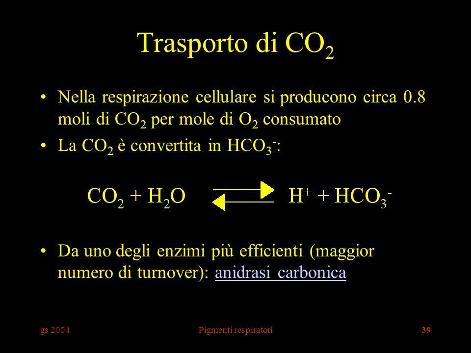 gs 2004Pigmenti respiratori39 Trasporto di CO 2 Nella respirazione cellulare si producono circa 0.8 moli di CO 2 per mole di O 2 consumato La CO 2 è convertita in HCO 3 - : Da uno degli enzimi più efficienti (maggior numero di turnover): anidrasi carbonicaanidrasi carbonica