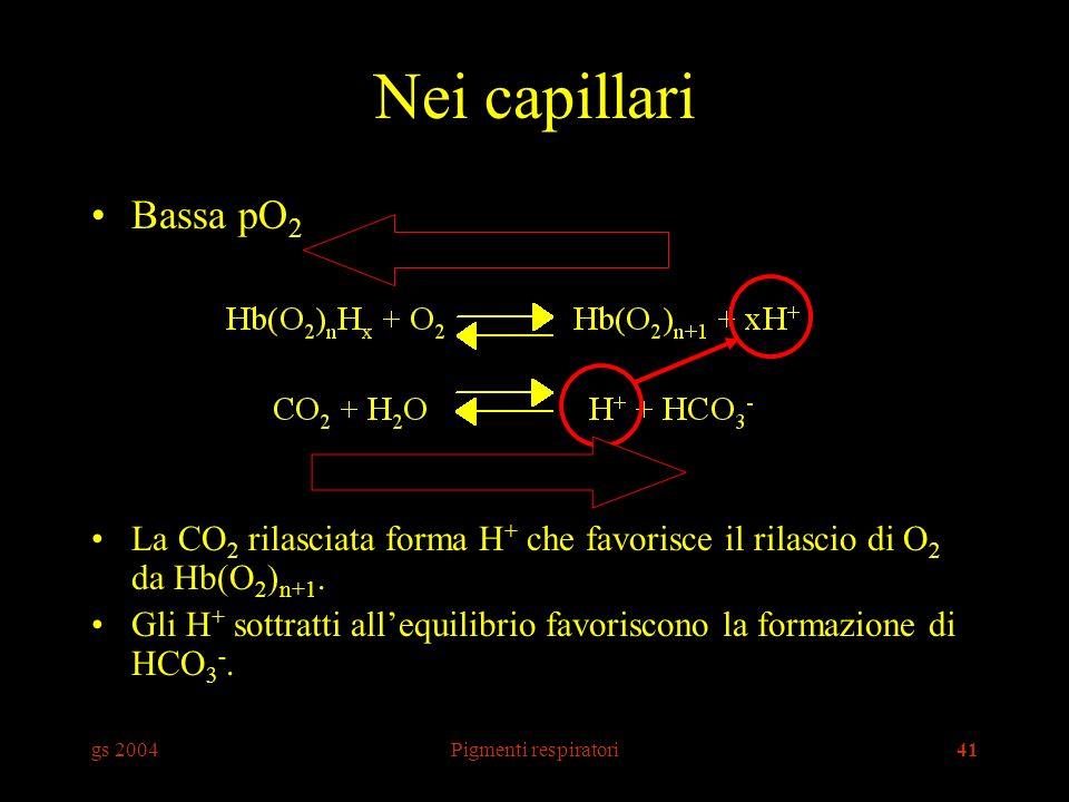 gs 2004Pigmenti respiratori41 Nei capillari Bassa pO 2 La CO 2 rilasciata forma H + che favorisce il rilascio di O 2 da Hb(O 2 ) n+1. Gli H + sottratt