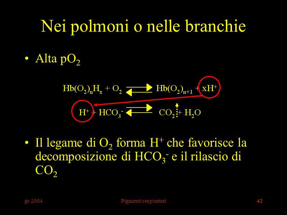 gs 2004Pigmenti respiratori42 Nei polmoni o nelle branchie Alta pO 2 Il legame di O 2 forma H + che favorisce la decomposizione di HCO 3 - e il rilasc