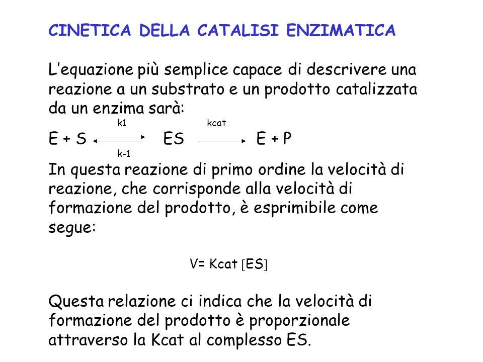 CINETICA DELLA CATALISI ENZIMATICA Lequazione più semplice capace di descrivere una reazione a un substrato e un prodotto catalizzata da un enzima sar