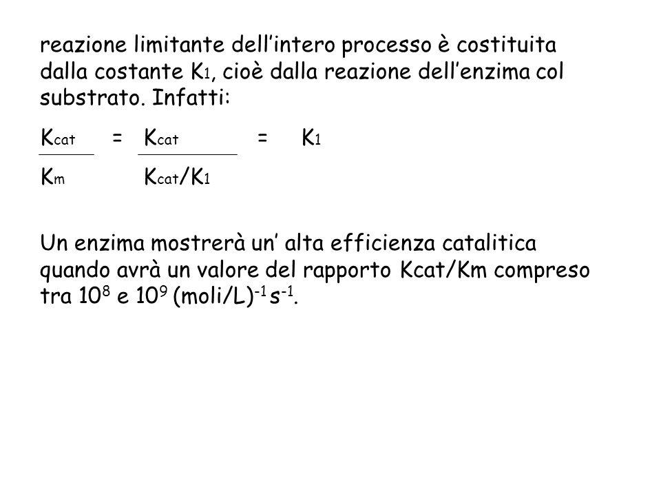 reazione limitante dellintero processo è costituita dalla costante K 1, cioè dalla reazione dellenzima col substrato. Infatti: K cat = K cat = K 1 K m
