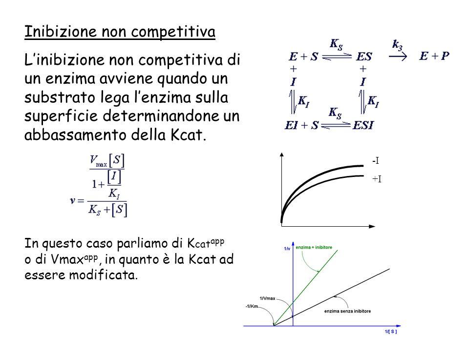 Inibizione non competitiva Linibizione non competitiva di un enzima avviene quando un substrato lega lenzima sulla superficie determinandone un abbass
