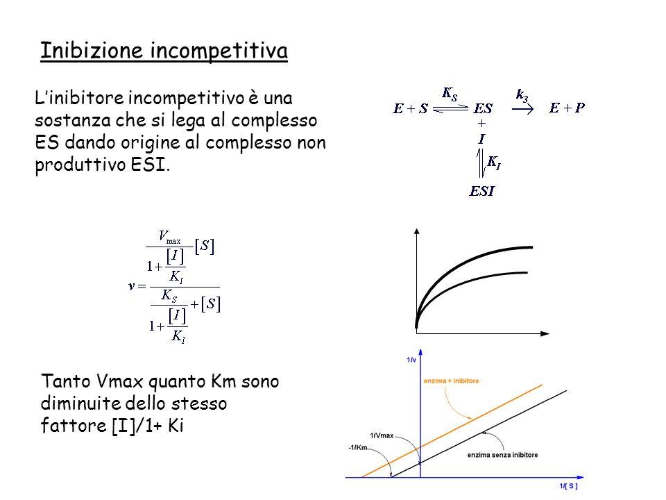 Inibizione incompetitiva Linibitore incompetitivo è una sostanza che si lega al complesso ES dando origine al complesso non produttivo ESI. Tanto Vmax