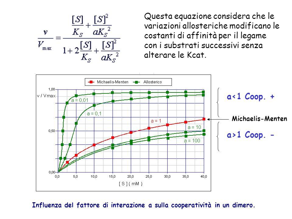 Influenza del fattore di interazione a sulla cooperatività in un dimero. a<1 Coop. + a>1 Coop. - Questa equazione considera che le variazioni alloster