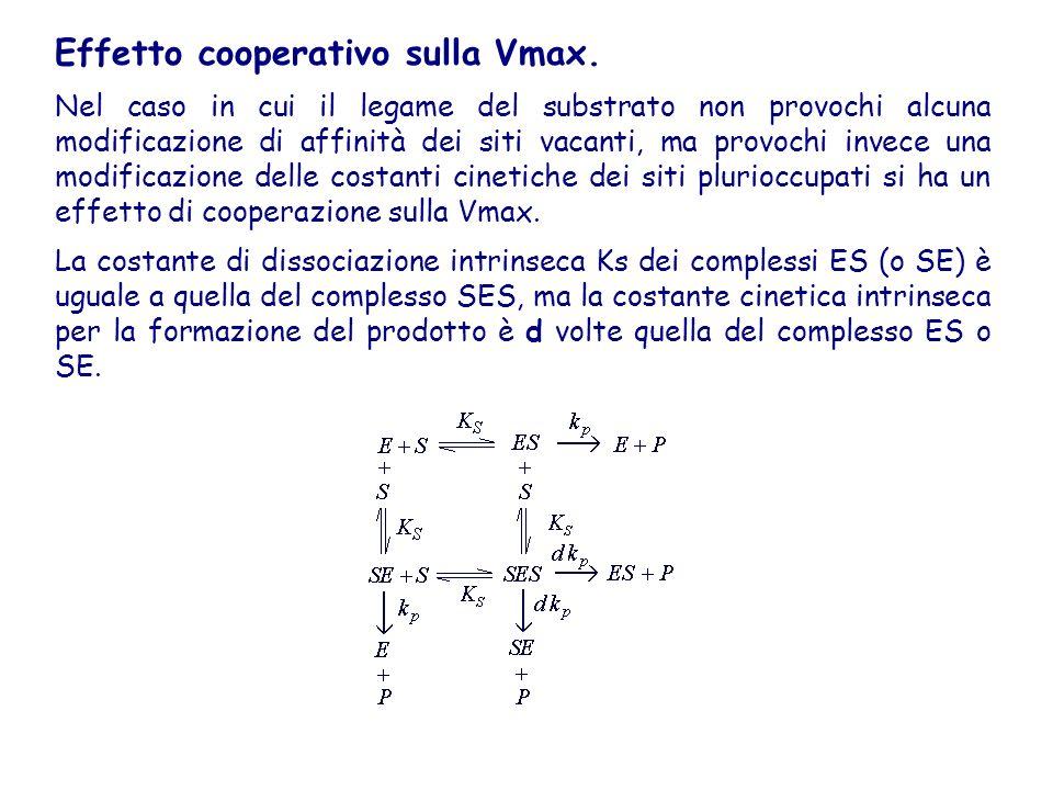 Effetto cooperativo sulla Vmax. Nel caso in cui il legame del substrato non provochi alcuna modificazione di affinità dei siti vacanti, ma provochi in