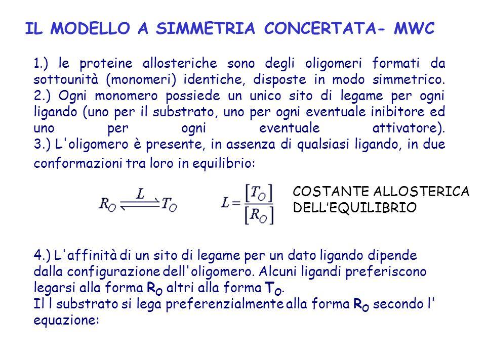 IL MODELLO A SIMMETRIA CONCERTATA- MWC 1.) le proteine allosteriche sono degli oligomeri formati da sottounità (monomeri) identiche, disposte in modo