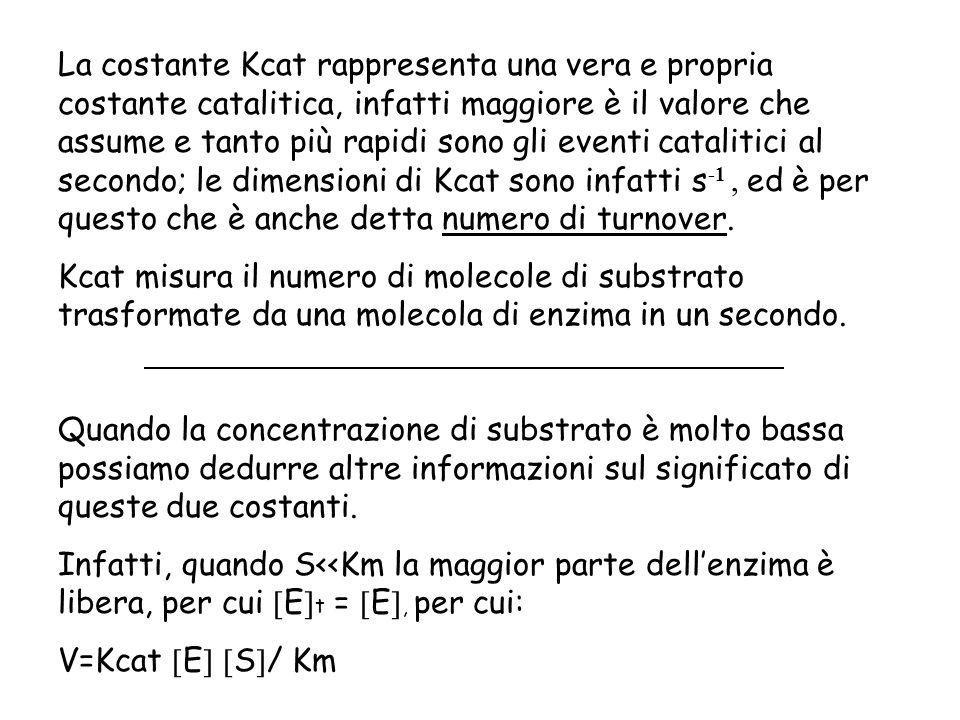 La costante Kcat rappresenta una vera e propria costante catalitica, infatti maggiore è il valore che assume e tanto più rapidi sono gli eventi catali