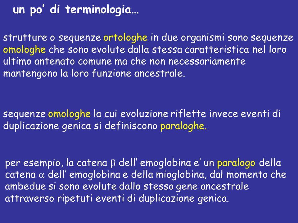 un po di terminologia… strutture o sequenze ortologhe in due organismi sono sequenze omologhe che sono evolute dalla stessa caratteristica nel loro ultimo antenato comune ma che non necessariamente mantengono la loro funzione ancestrale.