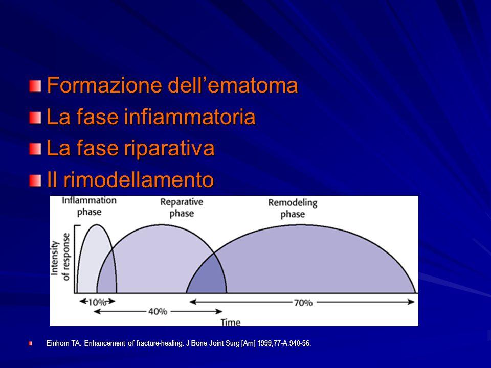 Formazione dellematoma La fase infiammatoria La fase riparativa Il rimodellamento Einhorn TA. Enhancement of fracture-healing. J Bone Joint Surg [Am]