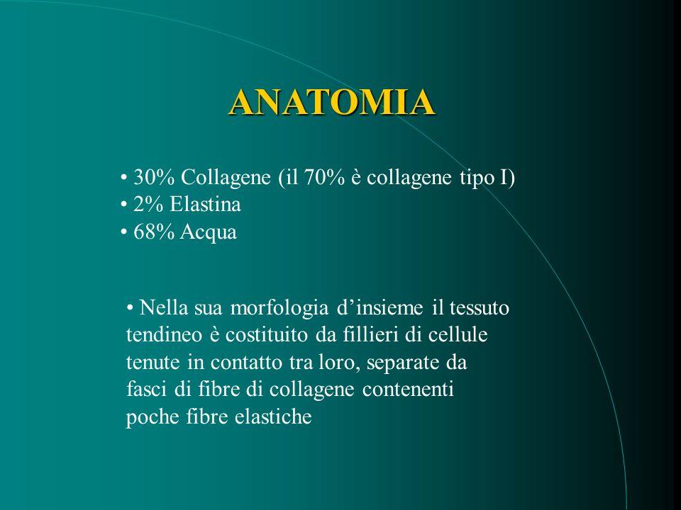 ANATOMIA 30% Collagene (il 70% è collagene tipo I) 2% Elastina 68% Acqua Nella sua morfologia dinsieme il tessuto tendineo è costituito da fillieri di cellule tenute in contatto tra loro, separate da fasci di fibre di collagene contenenti poche fibre elastiche