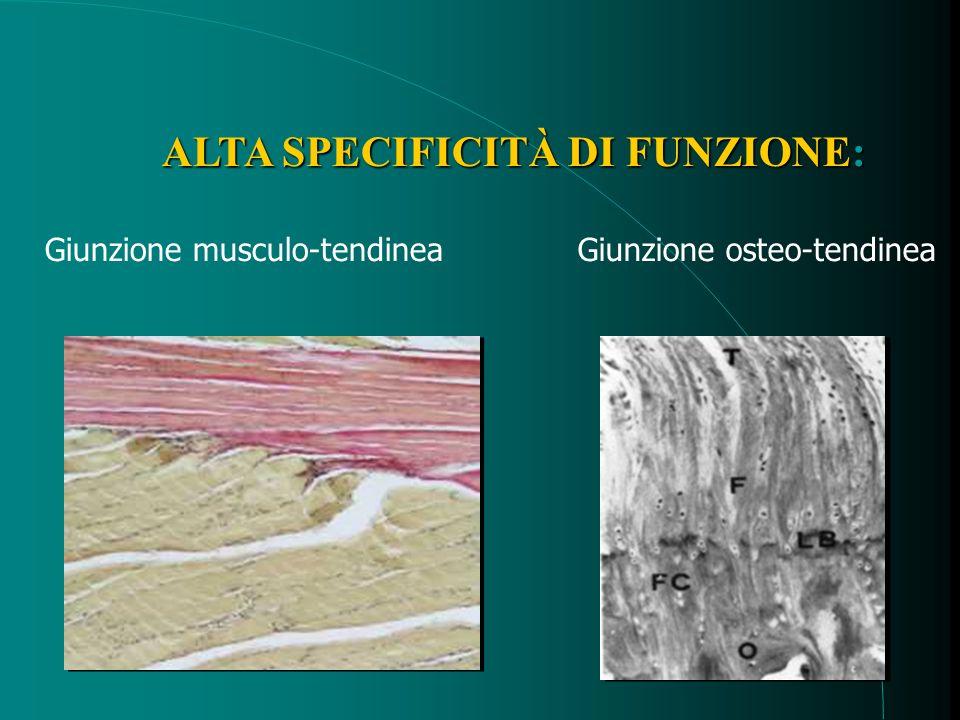 TRATTAMENTO CON FATTORI PIASTRINICI Procedura 1.Colloquio Preliminare ( consenso ) 2.