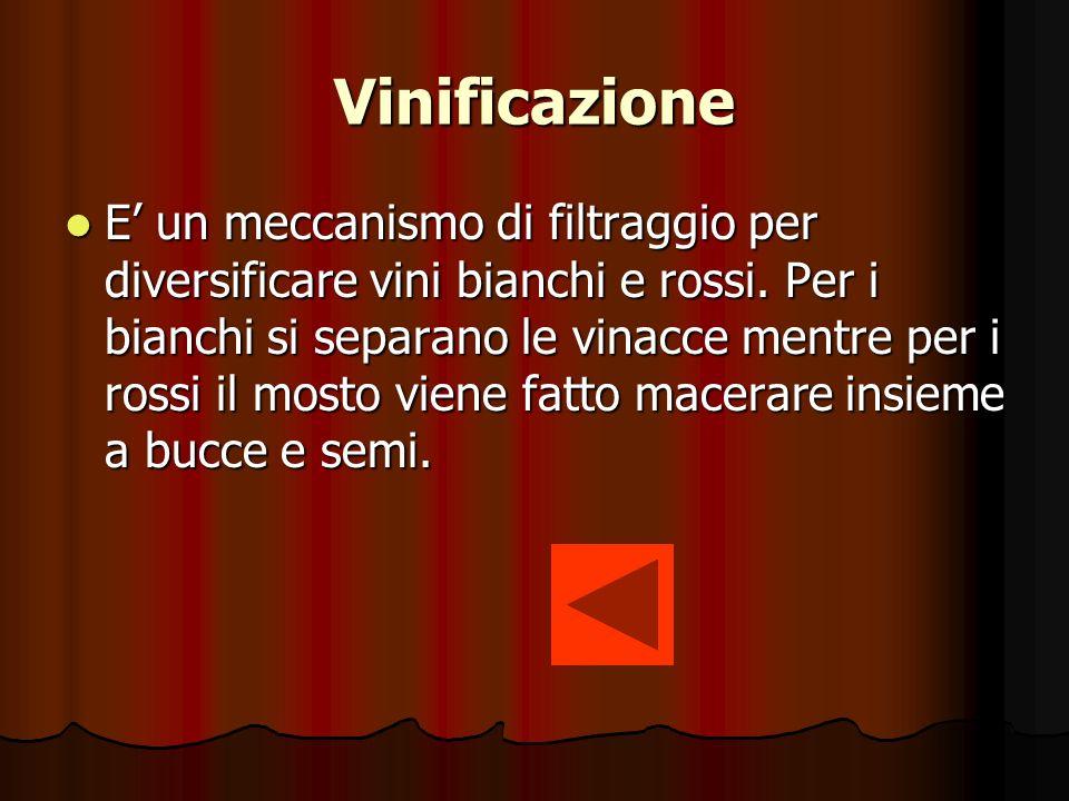 Vinificazione E un meccanismo di filtraggio per diversificare vini bianchi e rossi.