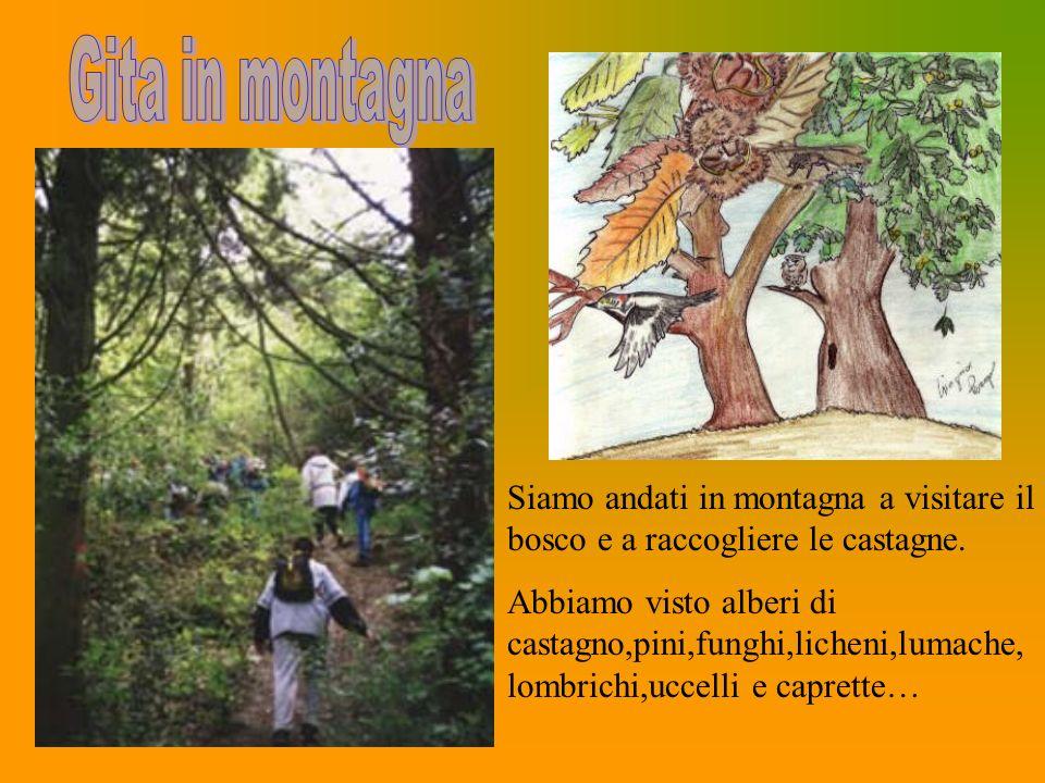 Siamo andati in montagna a visitare il bosco e a raccogliere le castagne. Abbiamo visto alberi di castagno,pini,funghi,licheni,lumache, lombrichi,ucce