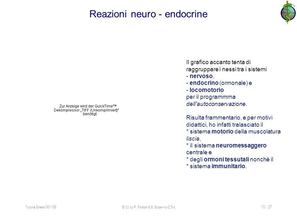Tutoria Stress 061106© Cc by P. Forster & B. Buser nc-2.5-it10 / 27 Reazioni neuro - endocrine Il grafico accanto tenta di raggruppare i nessi tra i s