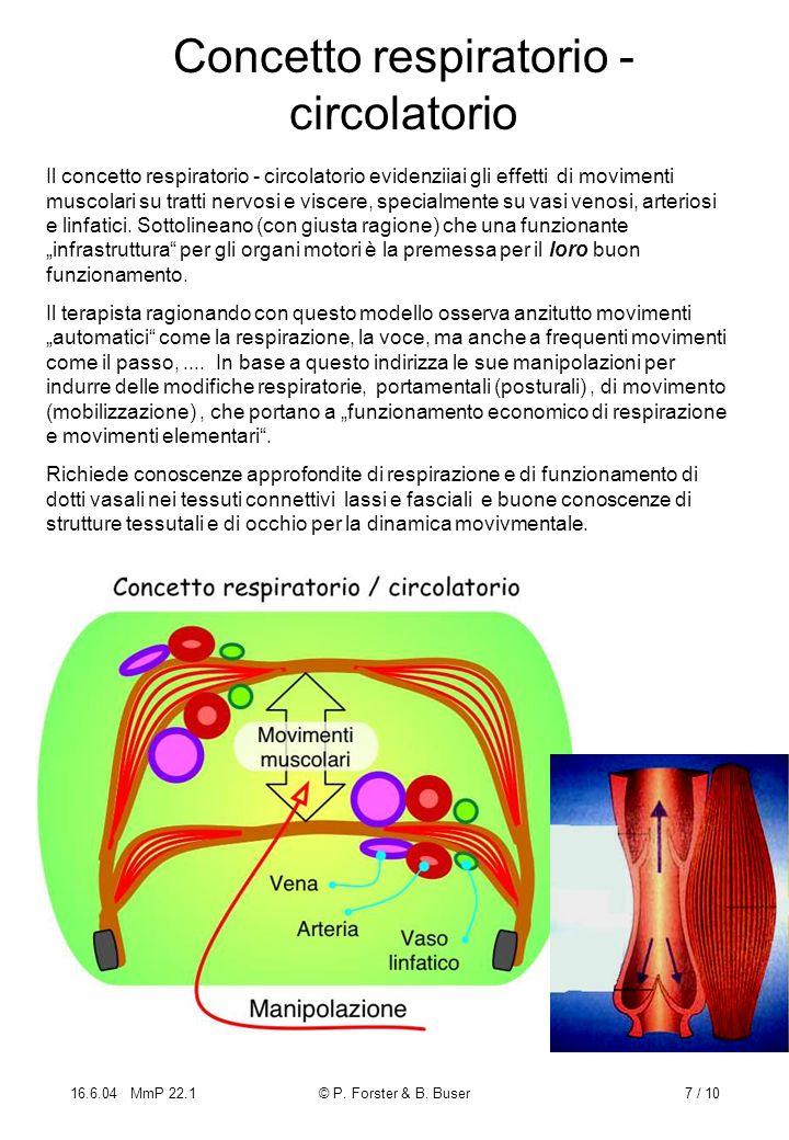 16.6.04 MmP 22.1© P. Forster & B. Buser7 / 10 Concetto respiratorio - circolatorio Il concetto respiratorio - circolatorio evidenziiai gli effetti di