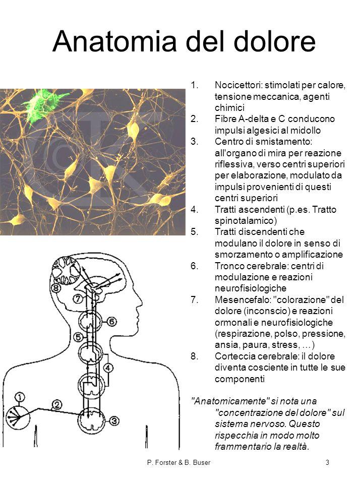 P. Forster & B. Buser3 Anatomia del dolore 1.Nocicettori: stimolati per calore, tensione meccanica, agenti chimici 2.Fibre A-delta e C conducono impul
