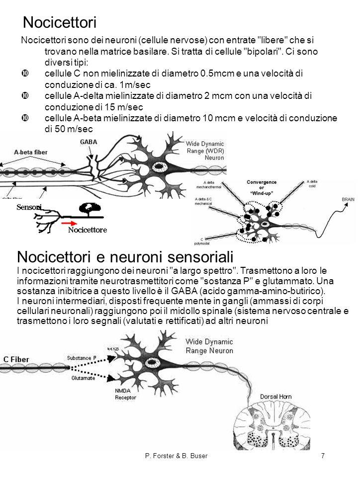 P. Forster & B. Buser7 Nocicettori e neuroni sensoriali I nocicettori raggiungono dei neuroni