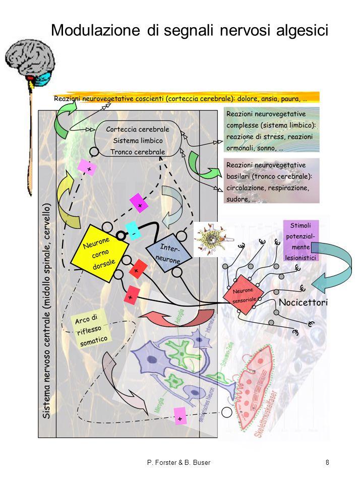 P. Forster & B. Buser8 Modulazione di segnali nervosi algesici