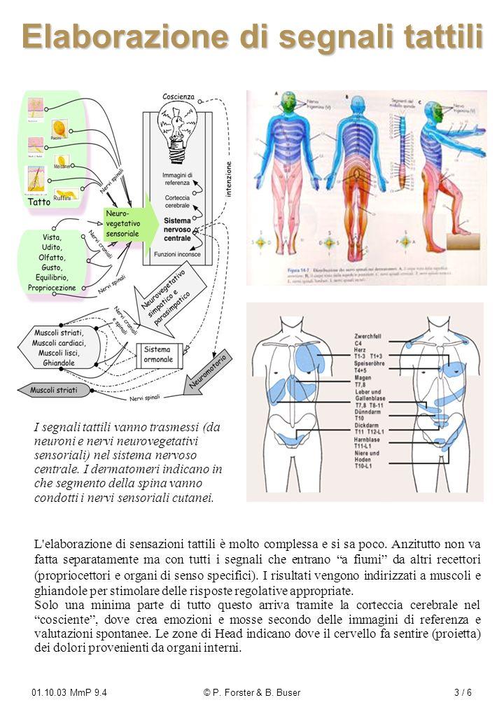 01.10.03 MmP 9.4© P. Forster & B. Buser3 / 6 Elaborazione di segnali tattili I segnali tattili vanno trasmessi (da neuroni e nervi neurovegetativi sen