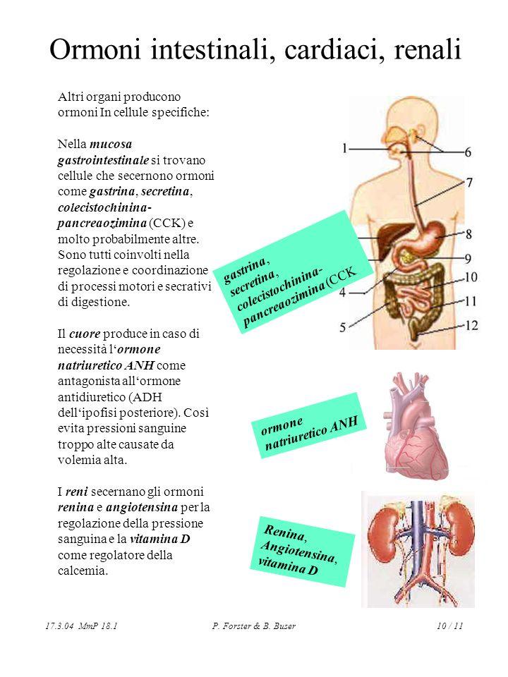 17.3.04 MmP 18.1P. Forster & B. Buser10 / 11 Ormoni intestinali, cardiaci, renali Altri organi producono ormoni In cellule specifiche: Nella mucosa ga