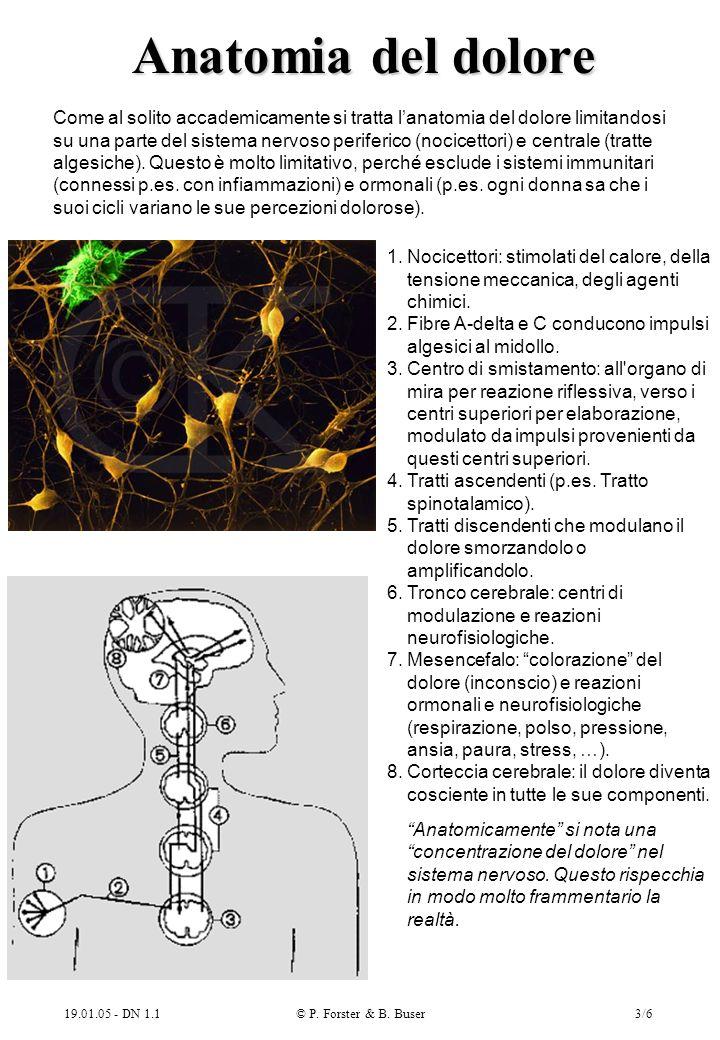 19.01.05 - DN 1.1© P.Forster & B. Buser3/6 Anatomia del dolore 1.