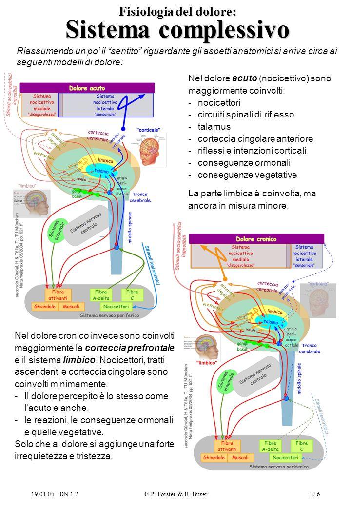 19.01.05 - DN 1.2© P. Forster & B. Buser3/ 6 Fisiologia del dolore: Sistema complessivo Riassumendo un po il sentito riguardante gli aspetti anatomici