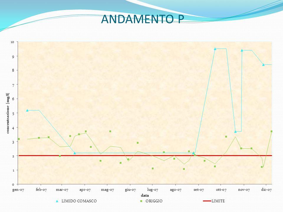 ANDAMENTO P