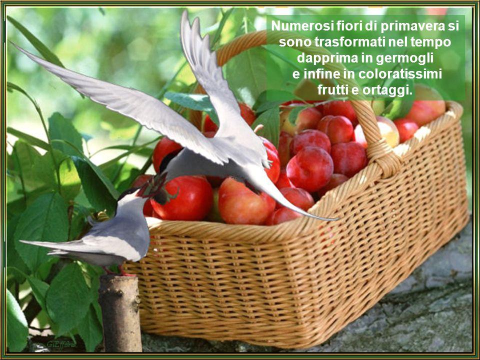 Numerosi fiori di primavera si sono trasformati nel tempo dapprima in germogli e infine in coloratissimi frutti e ortaggi.