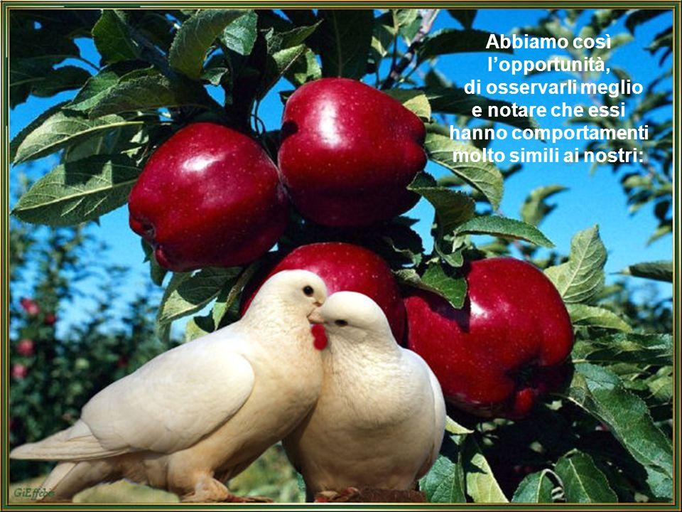 Gli uccelli, attratti dal clima ormai addolcito e dalla varietà così copiosa di cibi, nidificano in qualsiasi posto riparato e questo fa sì che li abbiamo particolarmente vicini in questo periodo