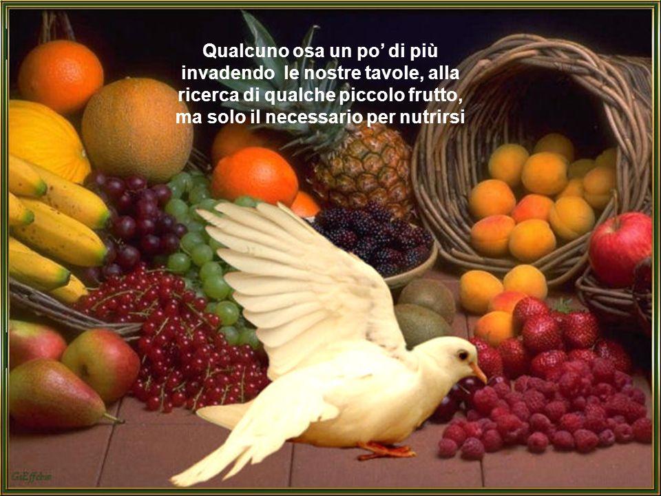 Qualcuno osa un po di più invadendo le nostre tavole, alla ricerca di qualche piccolo frutto, ma solo il necessario per nutrirsi