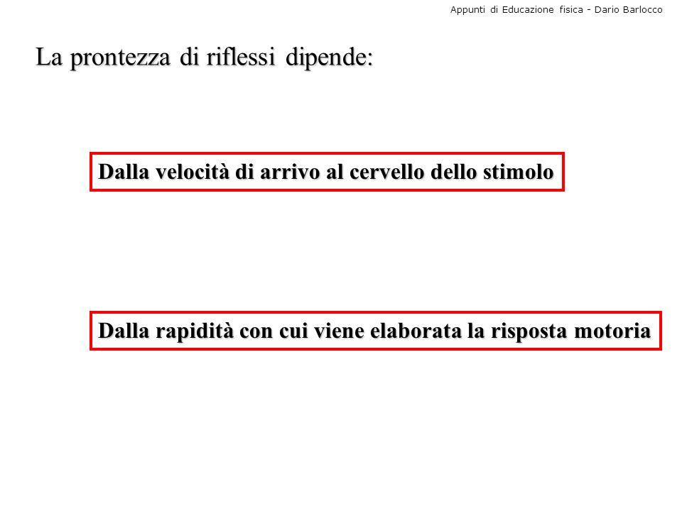 Appunti di Educazione fisica - Dario Barlocco La prontezza di riflessi dipende: Dalla velocità di arrivo al cervello dello stimolo Dalla rapidità con