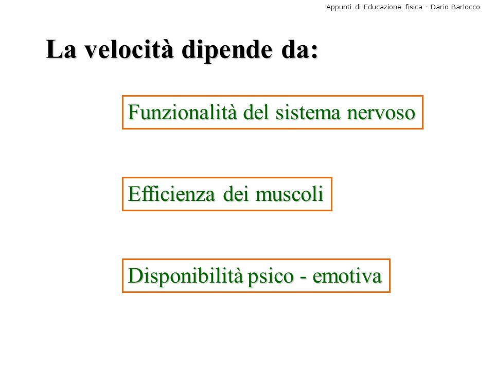 Appunti di Educazione fisica - Dario Barlocco La velocità dipende da: Funzionalità del sistema nervoso Efficienza dei muscoli Disponibilità psico - em