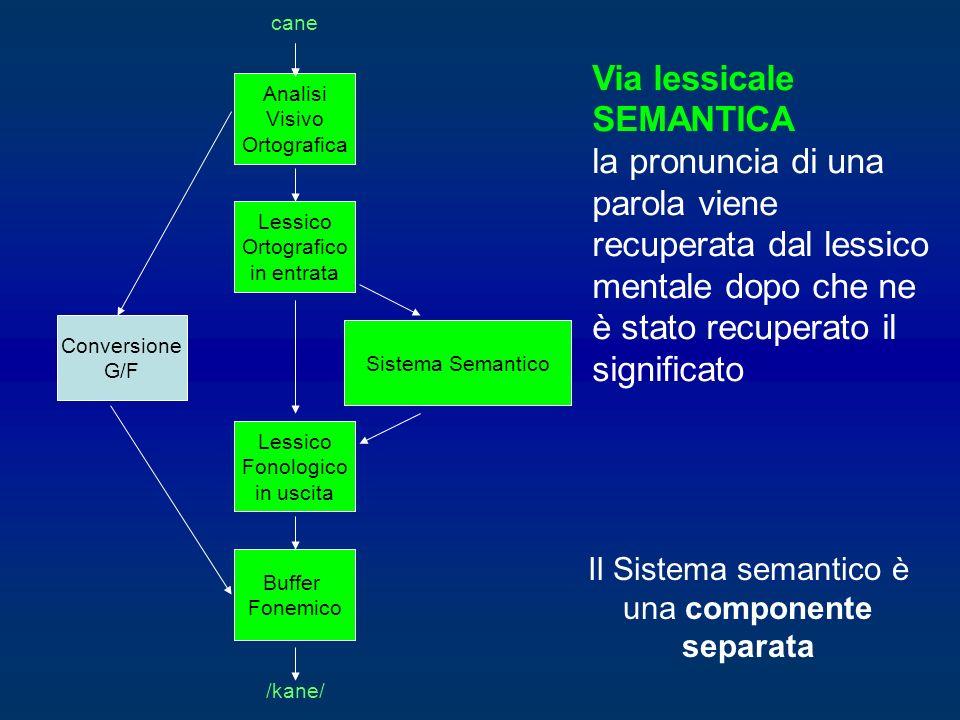 Via lessicale SEMANTICA la pronuncia di una parola viene recuperata dal lessico mentale dopo che ne è stato recuperato il significato Sistema Semantic