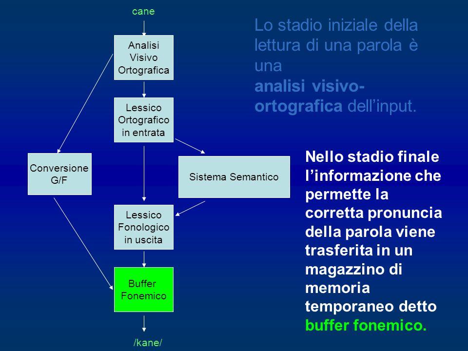Nello stadio finale linformazione che permette la corretta pronuncia della parola viene trasferita in un magazzino di memoria temporaneo detto buffer