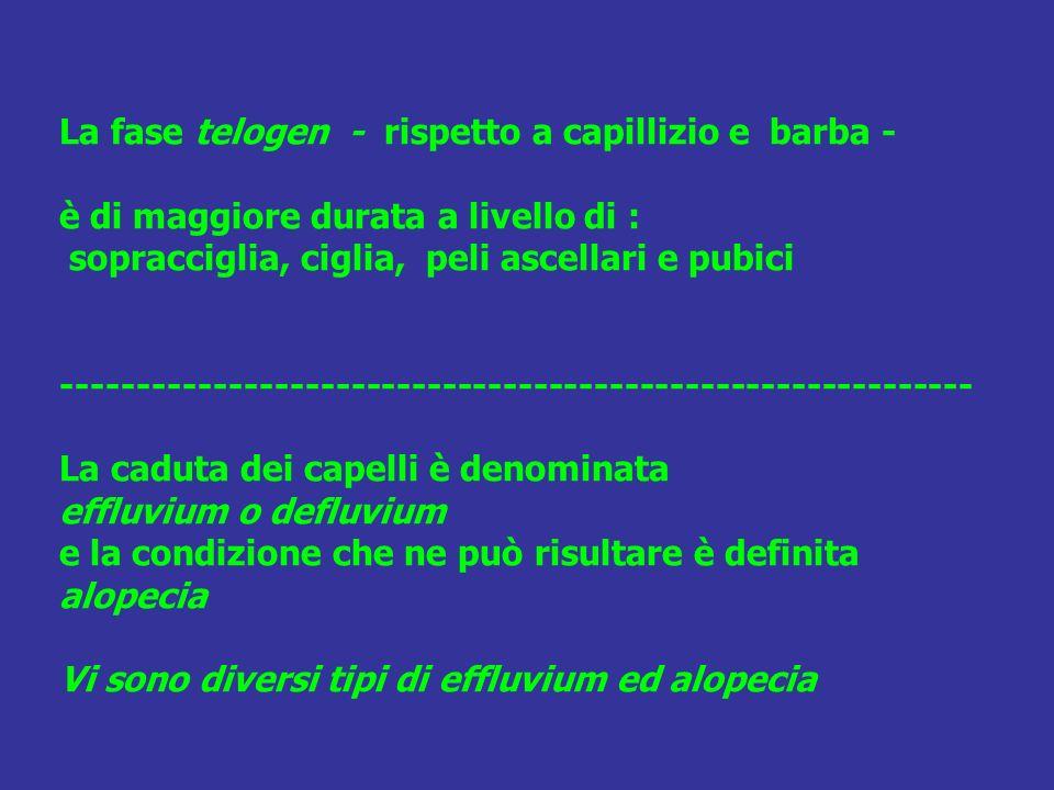 La fase telogen - rispetto a capillizio e barba - è di maggiore durata a livello di : sopracciglia, ciglia, peli ascellari e pubici ------------------