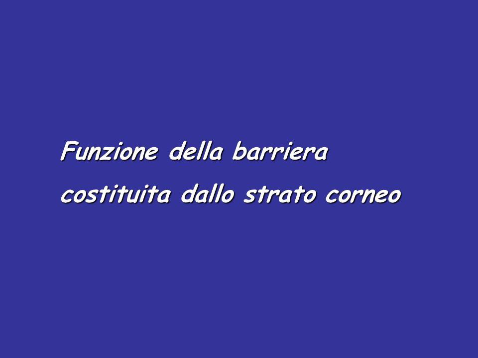 Funzione della barriera costituita dallo strato corneo