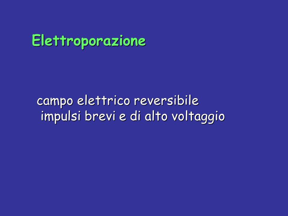 Elettroporazione campo elettrico reversibile impulsi brevi e di alto voltaggio campo elettrico reversibile impulsi brevi e di alto voltaggio