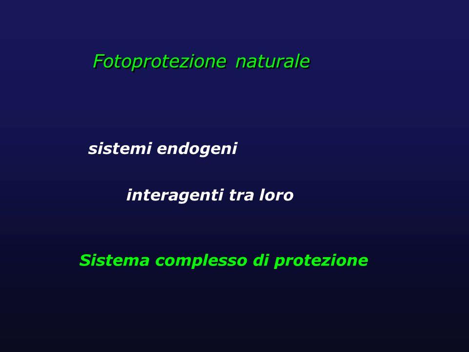 Fotoprotezione naturale sistemi endogeni interagenti tra loro Sistema complesso di protezione