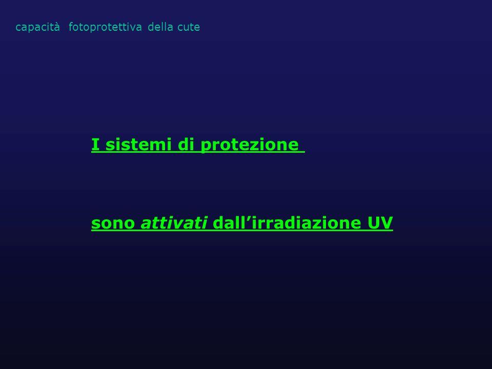 capacità fotoprotettiva della cute I sistemi di protezione sono attivati dallirradiazione UV