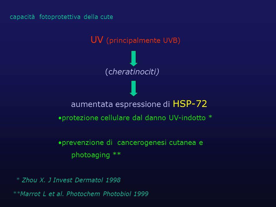 UV (principalmente UVB) (cheratinociti) aumentata espressione di HSP-72 protezione cellulare dal danno UV-indotto * prevenzione di cancerogenesi cutan