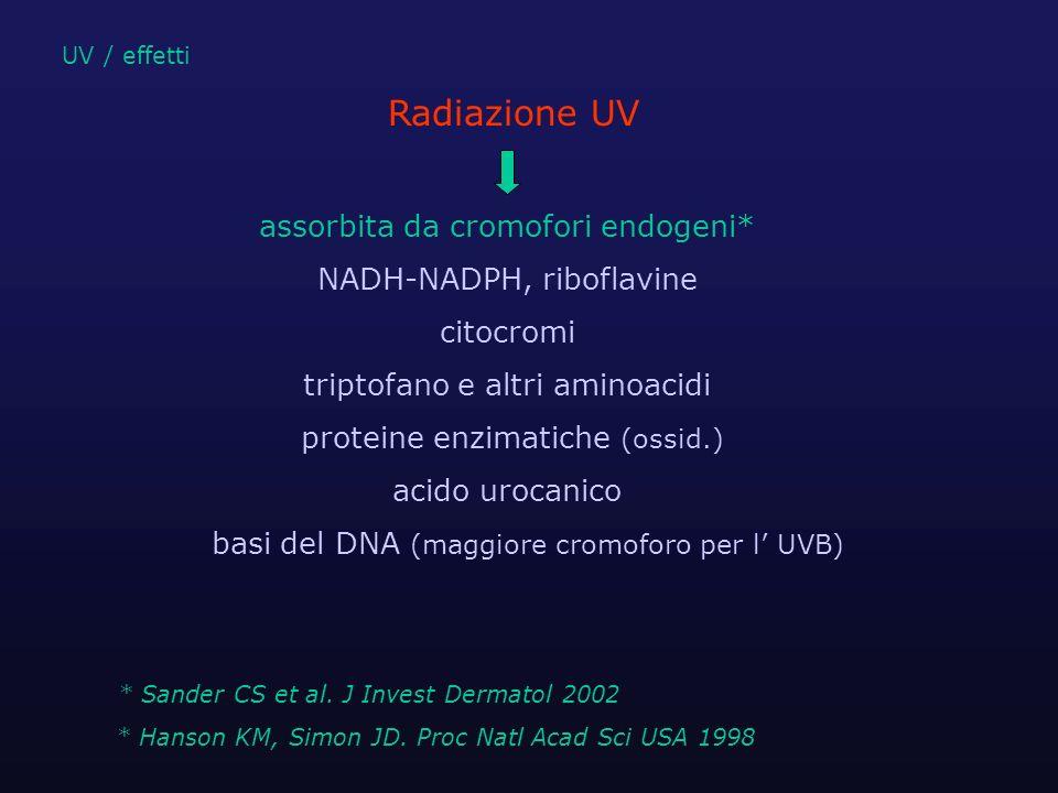 assorbita da cromofori endogeni* NADH-NADPH, riboflavine citocromi triptofano e altri aminoacidi proteine enzimatiche (ossid.) acido urocanico basi de
