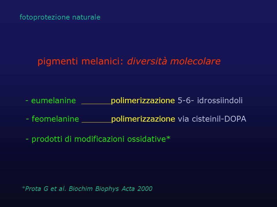 - eumelanine ______polimerizzazione 5-6- idrossiindoli - feomelanine ______polimerizzazione via cisteinil-DOPA - prodotti di modificazioni ossidative*
