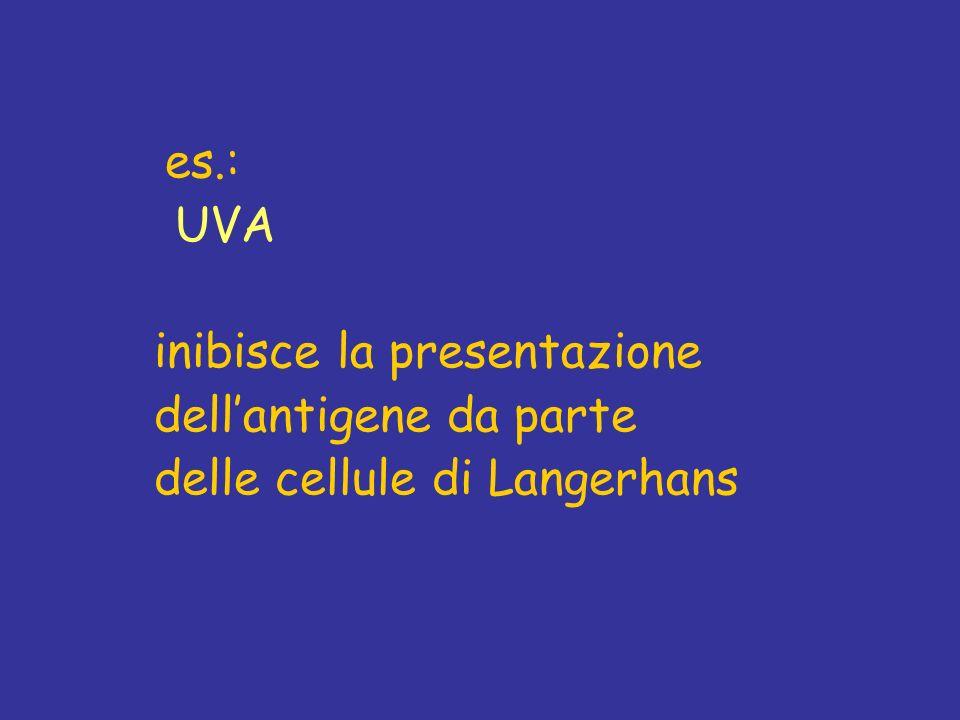 es.: UVA inibisce la presentazione dellantigene da parte delle cellule di Langerhans